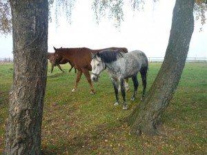 Pferde-300x225 hünengrab