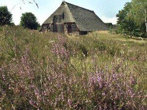 image-300x224 heide dans Urlaubsorte in Frankreich - Vos vacances en Allemagne